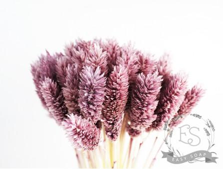 Сухоцвет фалярис стабилизированный фиолетовый