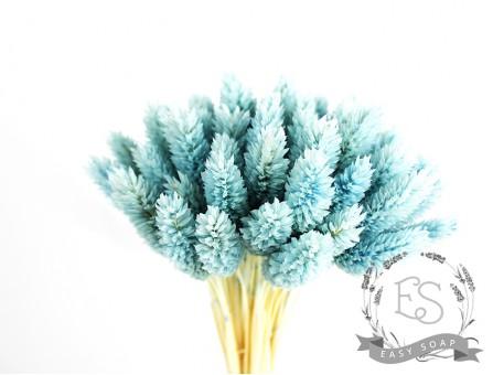 Сухоцвет фалярис стабилизированный голубой