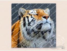 Картинка на водорастворимой бумаге №260014 - 6x6 см