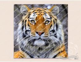 Картинка на водорастворимой бумаге №260015 - 6x6 см