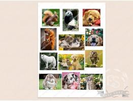 """Набор картинок на водорастворимой бумаге """"Животные"""" 7,0х5,0; 5,5*5,5"""