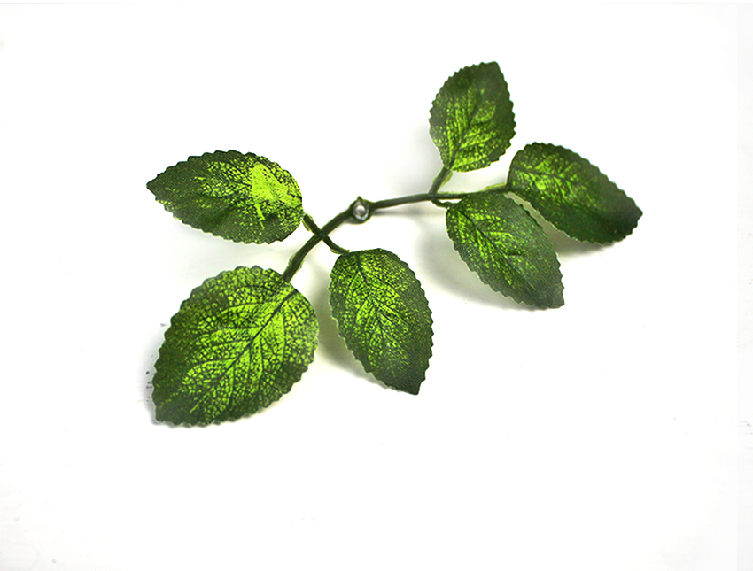 Розетка листиков  розы маленькая