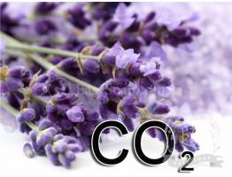 Экстракт СО2 лаванды