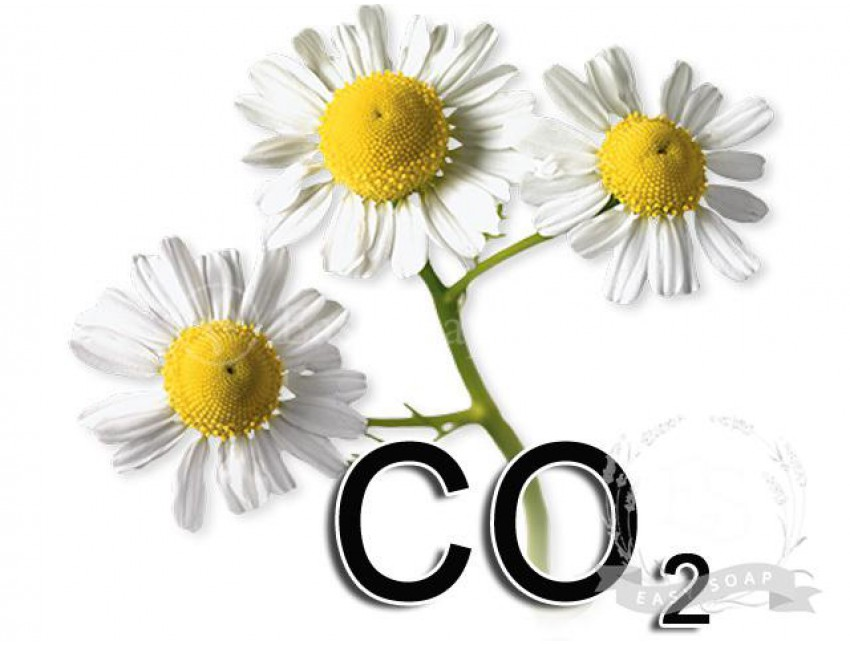 Экстракт СО2 ромашки