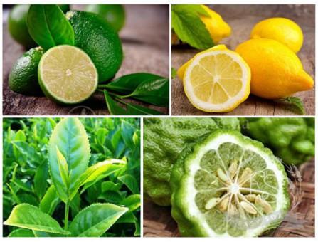"""Бленд """"Лимон и чайное дерево"""""""
