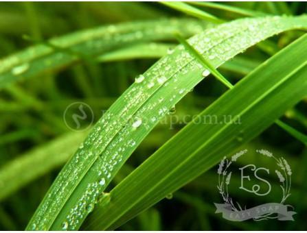 "Отдушка ""Свежескошенная трава"""