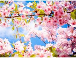 """Отдушка """"Весенний сад"""""""