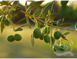ПАВ оливкового масла